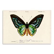 Insectes Printed Wall Art