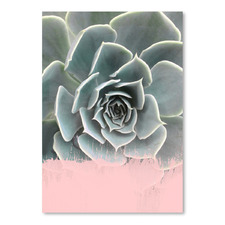 Pink on Succulent Printed Wall Art