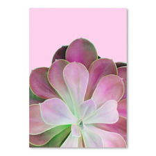 Pink Succulent Printed Wall Art
