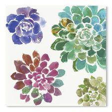 Water Succulents II Printed Wall Art