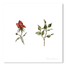 Loose Rose Buds Printed Wall Art