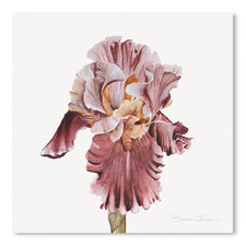 Pink Iris Printed Wall Art
