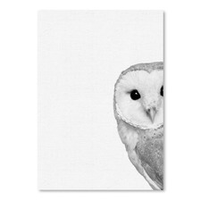 Barn Owl Printed Wall Art