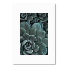 Succulent 2 Printed Wall Art