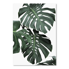 Monstera Jungle Printed Wall Art