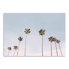 California Trees Printed Wall Art