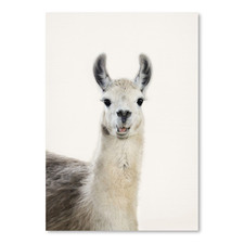 Funny Llama Printed Wall Art