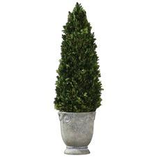 Boxwood Cone Topiary Botanical