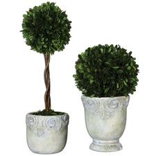 2 Piece Preserved Boxwood Ball Topiaries Botanicals Planter Set