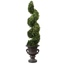 Preserved Boxwood Sprial Botanical Topiary