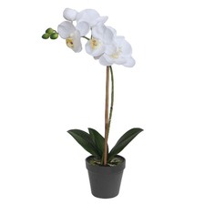 Potted Orchid with One Stem