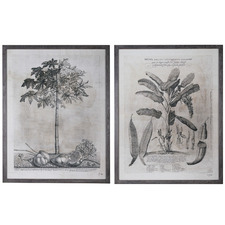 2 Piece Grey Trees Framed Printed Wall Art Set
