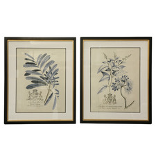 2 Piece Floral Framed Printed Wall Art Set