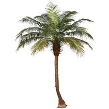 280cm Faux Phoenix Palm Tree