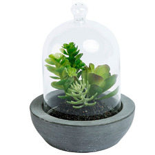 14cm Potted Faux Pigmyweed Plant with Glass Dome
