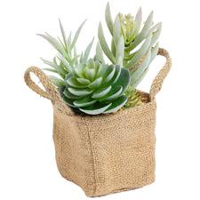 19cm Faux Succulents in Cloth Bag