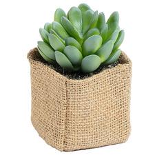 10cm Faux Echeveria Plant in Cloth Bag