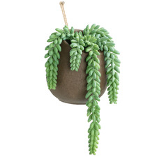 38cm Hanging Potted Faux String of Pearls Plant