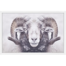 Majestic Curled Horns Wall Art