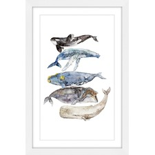 Whale Species Wall Art