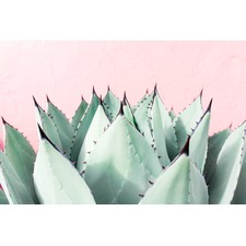 Sweet Succulents Wrapped Canvas Painting Print