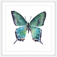 Watercolour Butterfly Framed Print