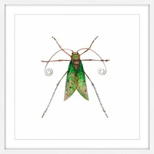 Green Fly Framed Print
