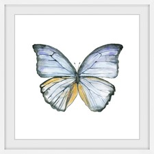 Blue Lace Wings Framed Print