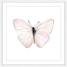 Translucent Pink Wings Framed Print