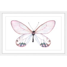 Pale Pink Butterfly Framed Print