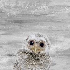 Snow Owl Canvas Wall Art