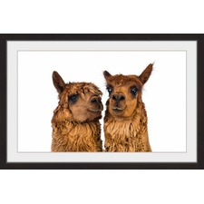 Brown Llama Pair II Framed Print