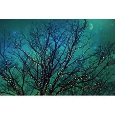 Magical Night Art Print on Canvas