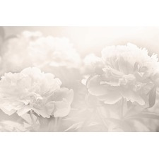 Peony Art Print on Canvas