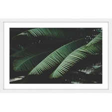 Night in the Tropics Framed Print