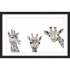 Giraffe Poses Framed Print
