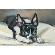 Frenchie Eyes Stretched Canvas Wall Art