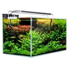 Starfire Glass 64L Aquarium Fish Tank with Filter Pump