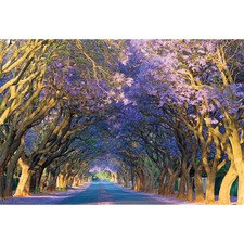 Jacaranda Alley Canvas Print