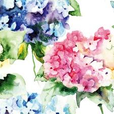 Hydrangeas Canvas