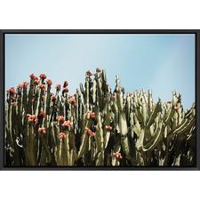 Cactus Flowers Print