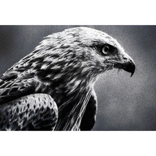 Bird of Prey Canvas Wall Art