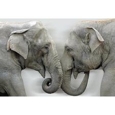 Elephants Kissing Canvas