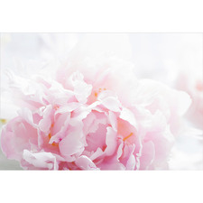 Delicate Pink Peony Canvas Wall Art