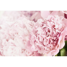 Focus on Peony Canvas Wall Art
