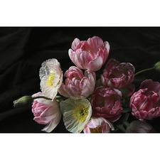 Lucille Florals Canvas