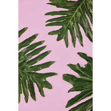 Philodendron Leaf II Canvas