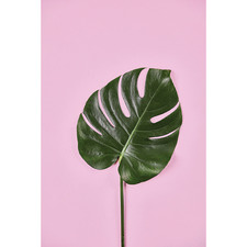 Monstera Leaf Canvas