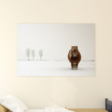 The Cold Pony Canvas Wall Art