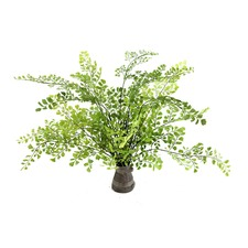 36cm Maiden Hair Fern (Set of 2)